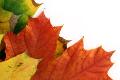 Isolated autumn leaves border Stock Image