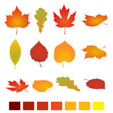 Isolated autumn leaves. Flat vector illustration. Isolated on white background. simple cartoon flat style, vector Royalty Free Stock Photo