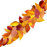 Isolated Autumn Leaves Royalty Free Stock Photos