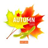 Sales banner with maple autumn leaves.. Isolated autumn leaves. Maple leaf. Autumn maple leaf isolated on a white background. Vector illustration Royalty Free Stock Images