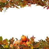 Isolated autumn leaves and pumpkins on a white background stock photos
