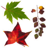 Isolated autumn leaves set. A few isolated bright autumn leaves on white background Royalty Free Stock Photography