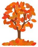 Isolated autumn tree Royalty Free Stock Photos