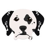 Isolated dalmatian avatar. Isolated avatar of a dalmatian. Dog breeds. Vector illustration design Royalty Free Stock Photos