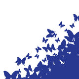 Isolated background with blue butterfly. Isolated white background with blue butterfly Stock Photos