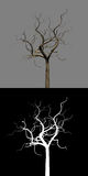 Isolated Bald Dead Tree Branch Masked Royalty Free Stock Photography