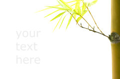 Isolated bamboo with copyspace for text purpose and clipping pat. H Royalty Free Stock Image