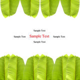 Isolated Banana Leaf On White Stock Photo