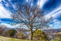 Isolated bare tree near a mountain path under a blue cloudy sky. Italy Stock Images