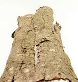 Isolated bark Stock Image