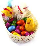 An isolated basket with Easter eggs and chickens Royalty Free Stock Image
