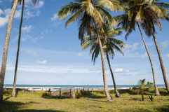 Tropical beach in Brazil Royalty Free Stock Images