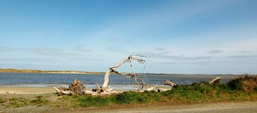 Isolated beach outside Invercargill, New Royalty Free Stock Photos