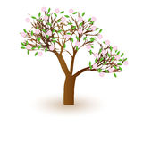 Isolated beautiful cherry blossom tree. Royalty Free Stock Photos