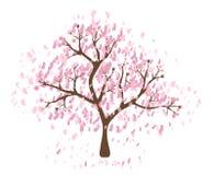 Isolated beautiful cherry blossom tree. Beautiful cherry blossom tree on white background; made using  graphics Stock Photography