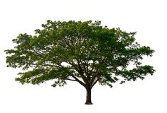 Isolated beautiful green tree royalty free stock photography