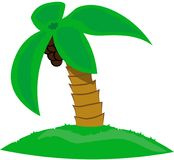 Isolated beautiful palm tree with coconuts on white background royalty free illustration