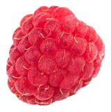 Isolated berry. One fresh raspberry fruit isolated on white back. Ground Royalty Free Stock Photos