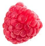 Isolated berry. One fresh raspberry fruit isolated on white back. Ground Royalty Free Stock Photography