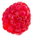 Isolated berry. One fresh raspberry fruit isolated on white back. Ground Stock Photo