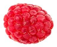 Isolated berry. One fresh raspberry fruit isolated on white back. Ground Stock Photography