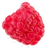 Isolated berry. One fresh raspberry fruit isolated on white back. Ground Royalty Free Stock Photo