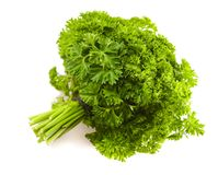 Isolated big banch of a parsley Stock Images