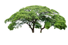 Isolated big tree Royalty Free Stock Photography