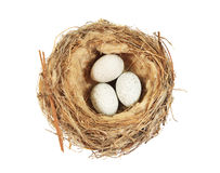 Isolated bird nest Royalty Free Stock Images