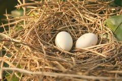 Isolated Bird's Nest Stock Photo