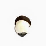 Isolated biscuit mushroom Stock Photo