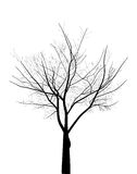 Isolated black bare tree illustration Stock Photo