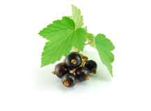 Isolated black currant Royalty Free Stock Image