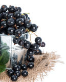 Isolated Black Currants Stock Image