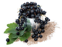 Isolated Black Currants Stock Photos