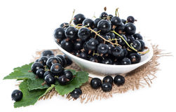 Isolated Black Currants Stock Photo