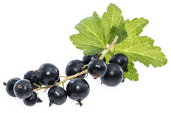 Isolated Black Currants Royalty Free Stock Image