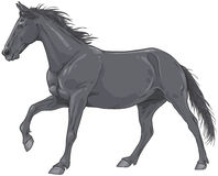 Isolated black galloping horse illustration Stock Photos