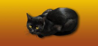 Isolated black and grey cat