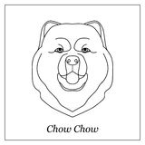 Isolated black outline head of chow chow on white background. Line cartoon breed dog portrait. Stock Image
