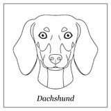 Isolated black outline head of dachshund on white background. Line cartoon breed dog portrait. Isolated black outline head of dachshund on white background Royalty Free Stock Photo