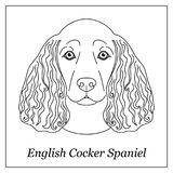 Isolated black outline head of english cocker spaniel on white background. Line cartoon breed dog portrait. Isolated black outline head of english cocker Stock Photo