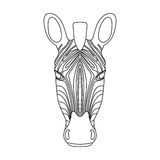 Isolated black outline head of zebra on white background. Line cartoon portrait. Stock Photo