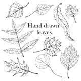 Isolated black stamps of leaves of tree on white background. Leaf ink print. Set of plant imprint. stock illustration
