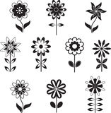 Isolated Black and White Flower Illustrations. Flora, nature, plants, black flowers, white flowers Stock Photography
