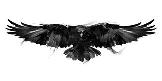 Isolated black and white illustration of a flying bird crow front. Isolated black and white art of a flying bird crow front Royalty Free Stock Photo