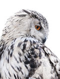 Isolated black and white owl Royalty Free Stock Photo