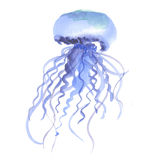 Isolated blue jellyfish watercolor illustration. Stock Image
