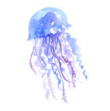 Isolated blue jellyfish watercolor illustration. Stock Images