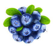 Isolated blueberries Royalty Free Stock Image